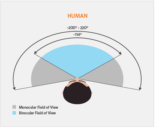 Field of view depends on both monocular and binocular vision. (Source: vr-lens-lab.com)